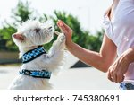 Stock photo dog give a high five to female owner 745380691