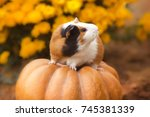 funny guinea pig sitting on... | Shutterstock . vector #745381339