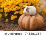 funny guinea pig sitting on... | Shutterstock . vector #745381357