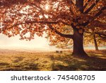 oak tree with golden foliage on ... | Shutterstock . vector #745408705