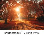 scenic image of bright trees in ... | Shutterstock . vector #745454941