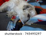Cute White Dog Asleep On...