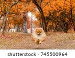 a beautiful dog runs through... | Shutterstock . vector #745500964