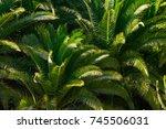 palm keaves background | Shutterstock . vector #745506031