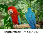 blue and red macaw bird one of... | Shutterstock . vector #745514347