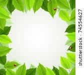 frame with fresh green leaves... | Shutterstock .eps vector #74554627