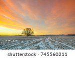 lonely tree on the field in the ... | Shutterstock . vector #745560211