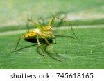 jumping spider | Shutterstock . vector #745618165