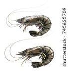 raw prawn or tiger shrimp set... | Shutterstock . vector #745635709