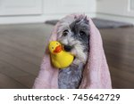 cute dog  with pink towel and... | Shutterstock . vector #745642729