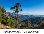 Tall Narrow Pine Stands On The...