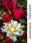 flower | Shutterstock . vector #745676341