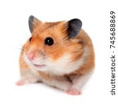 Stock photo hamster isolated on white background 745688869