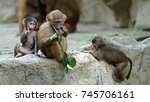 young baboons | Shutterstock . vector #745706161