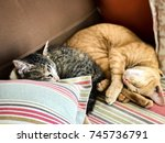 Two Cats Sleep On The Soft...
