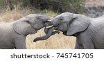 two elephant greet affectionate ... | Shutterstock . vector #745741705