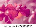 Bright Burgundy Flower....