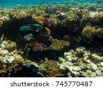 the marvelous sea bottom of... | Shutterstock . vector #745770487