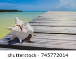 Dry white conch shell on The Long Dock in Cherokee Sound, Marsh Harbour, Abaco, The Bahamas. Old wooden dock stretches out over sea with beautiful blue sky in the background.