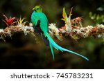 resplendent quetzal ... | Shutterstock . vector #745783231
