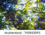 Under The  Green Leaf Image Fo...