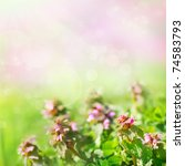 Spring nature background with field flowers - stock photo