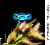 Funny Smiling Blue Dragonfly...