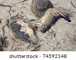 bird killed in gulf of mexico... | Shutterstock . vector #74592148