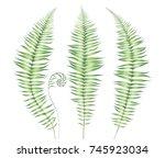 set of watercolor ferns... | Shutterstock . vector #745923034