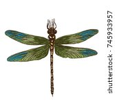 Color Dragonfly Hand Drawn....