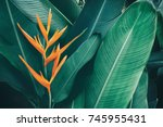 exotic flower  tropical foliage ... | Shutterstock . vector #745955431