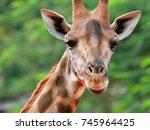 giraffe face looking at camera... | Shutterstock . vector #745964425