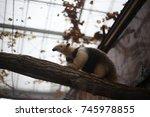 anteater  | Shutterstock . vector #745978855