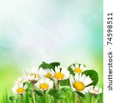 Spring background with daisies - stock photo