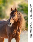 Small photo of Red horse with long mane close up portrait