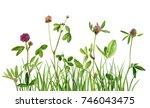 watercolor drawing wild plants... | Shutterstock . vector #746043475