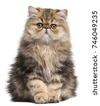 Stock photo persian kitten months old sitting in front of white background 746049235