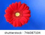gerbera. bright red gerbera... | Shutterstock . vector #746087104
