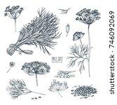 dill set. hand drawn sketch...   Shutterstock . vector #746092069