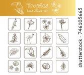 hand drawn doodle tropics set.... | Shutterstock .eps vector #746105665