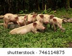a group of suckling pose on a... | Shutterstock . vector #746114875