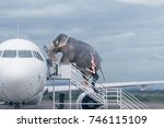 Stock photo woman loading elephant on board of plane concept of baggage overweight or travel with domestic pets 746115109