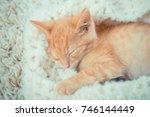Stock photo little red kitten the kitten lies on the fluffy carpet at home little kitten sleeps close up of 746144449