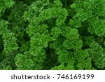 green parsley leaf background.... | Shutterstock . vector #746169199