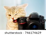 Stock photo funny cat with a camera 746174629