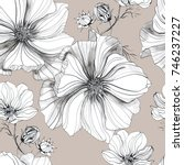 Stock photo botanical drawing flowers cosmos pattern seamless flower pattern background with cosmos flower 746237227