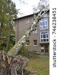 Storm Damage With Fallen Birch...