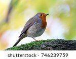 robin   Shutterstock . vector #746239759