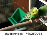 a wavy parrot is sitting in... | Shutterstock . vector #746250085