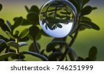 Reflection In Crystal Ball Of...